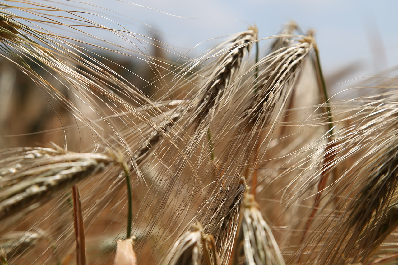 Why You Should Remove Gluten from Your Diet