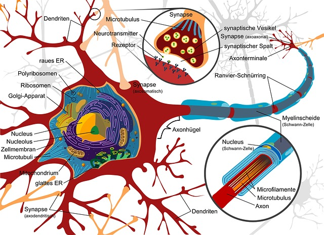 Sugar, the Brain/Nervous System and Inflammation